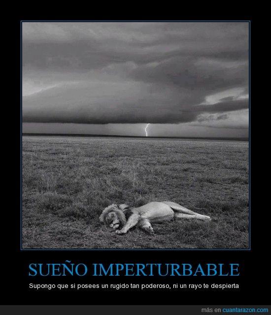 blanco y negro,despertar,dormido,dormir,felino,león,rayo,ruido,sabana,sonido,tormenta,trueño