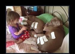Enlace a Esta niña se confunde de tiritas y usa salvaslips con sus perros, qué paciencia