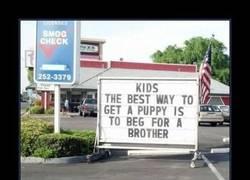 Enlace a Si quieres un perrito pide un hermano