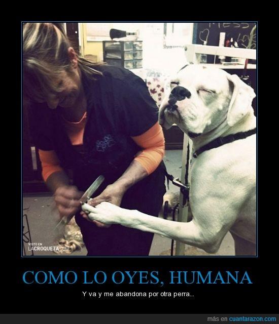 humana,lima,perro,pezuñas,uñas