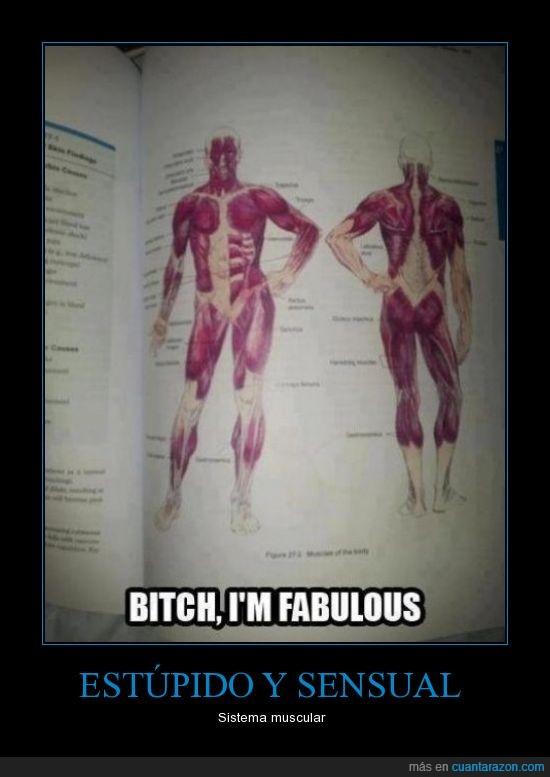 cuerpo humano,libro de biología,sensual