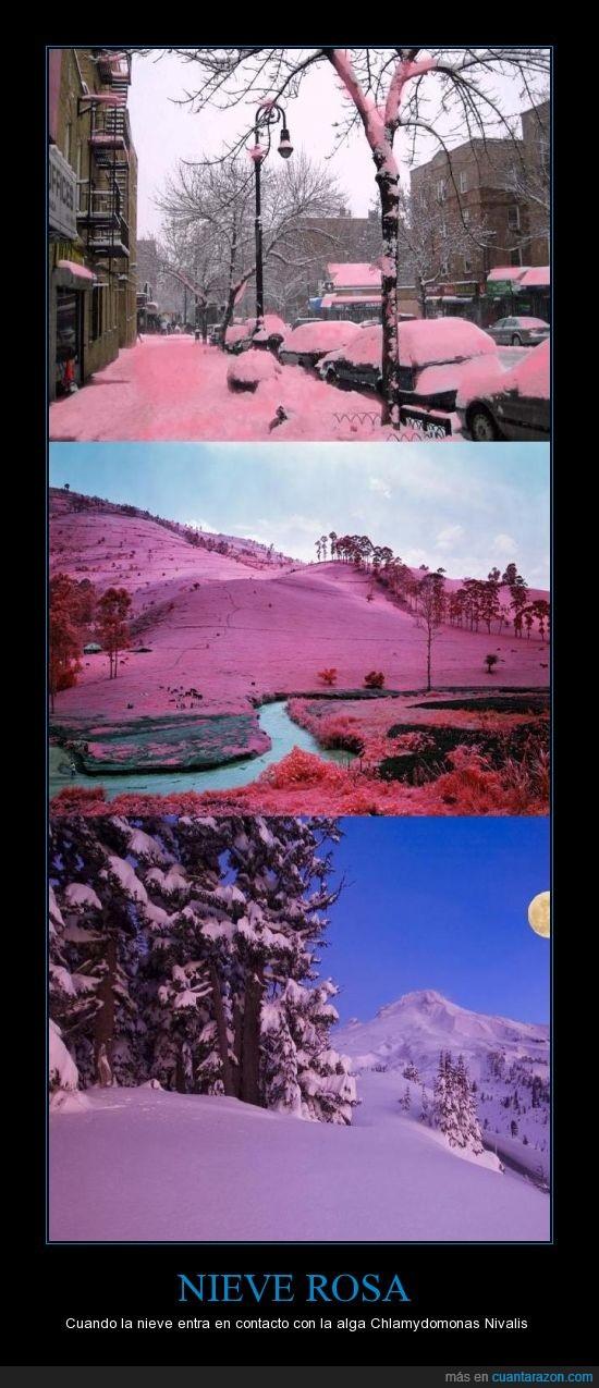 alga,Estados Unidos,extraño,nieve,paisaje,rosa,sucedió en Colorado