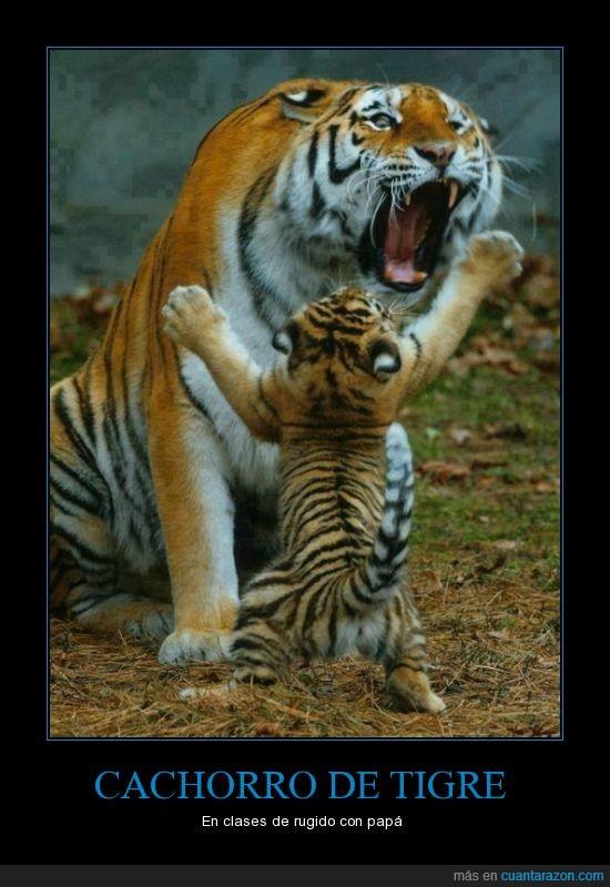 cachorro,clase,papa,rugido,rugir,tigre