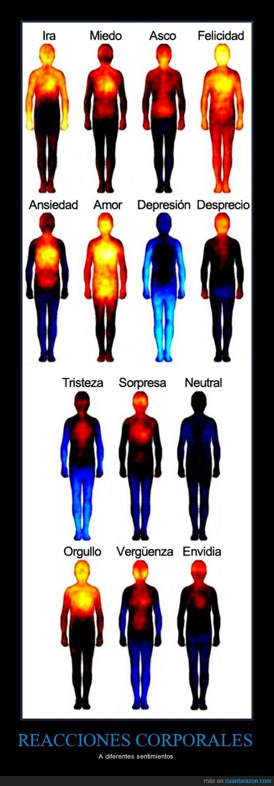 cuerpo,reaccion,sangre,temperatura
