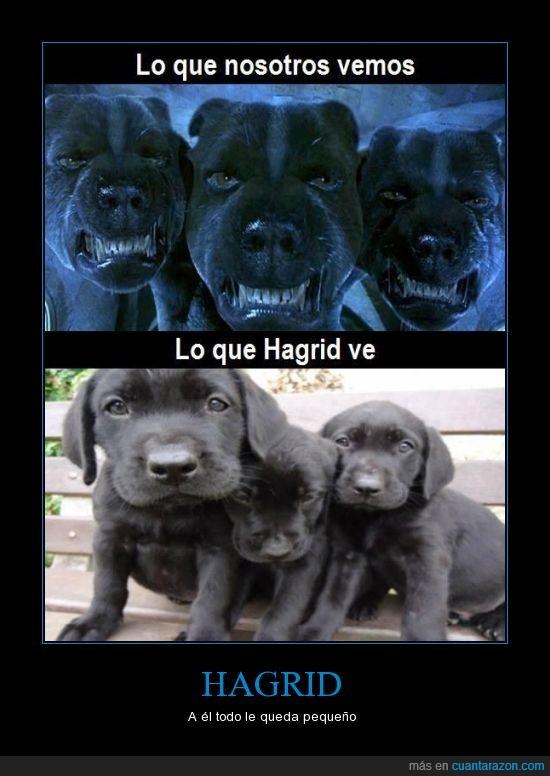 cabezas,cachorro,cancervero,dulce,fluffy,hagrid,negro,perrito,perro,tres