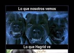 Enlace a Hagrid y su amor por los animalillos