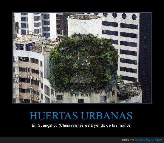 balcon,China,ciudad,Huerta urbana,medio,planta,verde