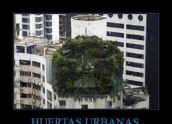 Enlace a Este balcón tiene demasiadas plantas