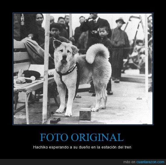 amigo fiel,dueño,foto de Facebook,hachiko,perro,tren