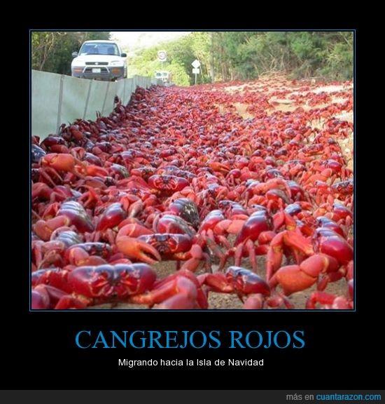 cangrejos rojos,familia de Don cangrejo,migración,monos
