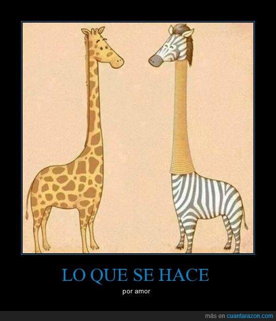 amor,aros,cebra,cuello,deformar,jirafa,largo