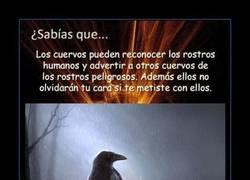 Enlace a Nunca te metas con un cuervo, lo recordará