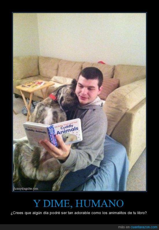 amor,amorosos,cuento,fieles,leer,niños,Perro,puro