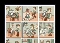 Enlace a Los dueños de gatos me entenderán perfectamente