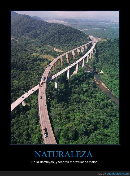 bosque,construccion,encima,hombre,Naturaleza,puente,tierra