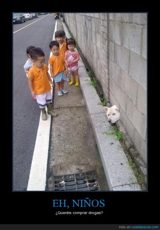 agujero,cabeza,drogas,mirar,niños,perro,que clase de botas lleva el niño del frente?