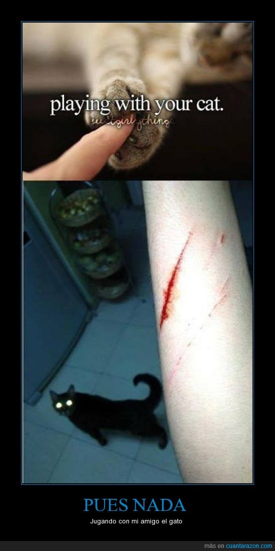 arañazo gato,funny,garras,negro,normal,poseido,rasguño