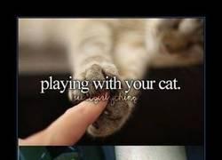 Enlace a No entiendo por qué a la gente le gustan tanto los gatos...