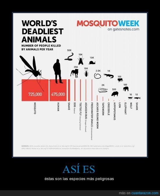 caracol,cocodrilo,elefante,gusano,hipopotamo,humano,insecto,leon,lobo,mosca,mosquito,muertes,perro,seriente,tiburon