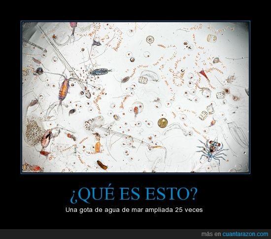 agua,animal,bicho,celula,gota,mar,mares,microorganismos,oceano,tierra