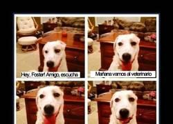 Enlace a Para que luego digan que los perros no nos entienden