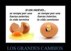 Enlace a La vida explicada con huevos