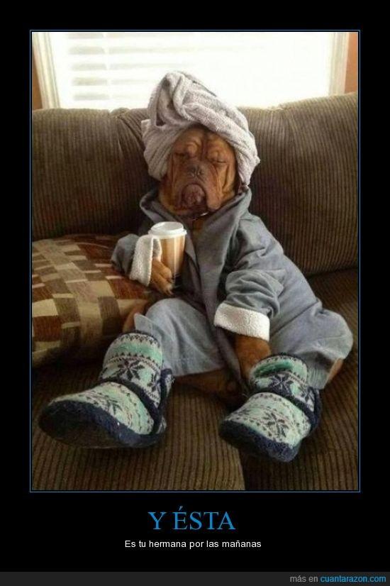 albornoz,botas,cabeza,cafe,hermana,perro,resaca,starbucks,toalla,turbante,uggs,zapatillas
