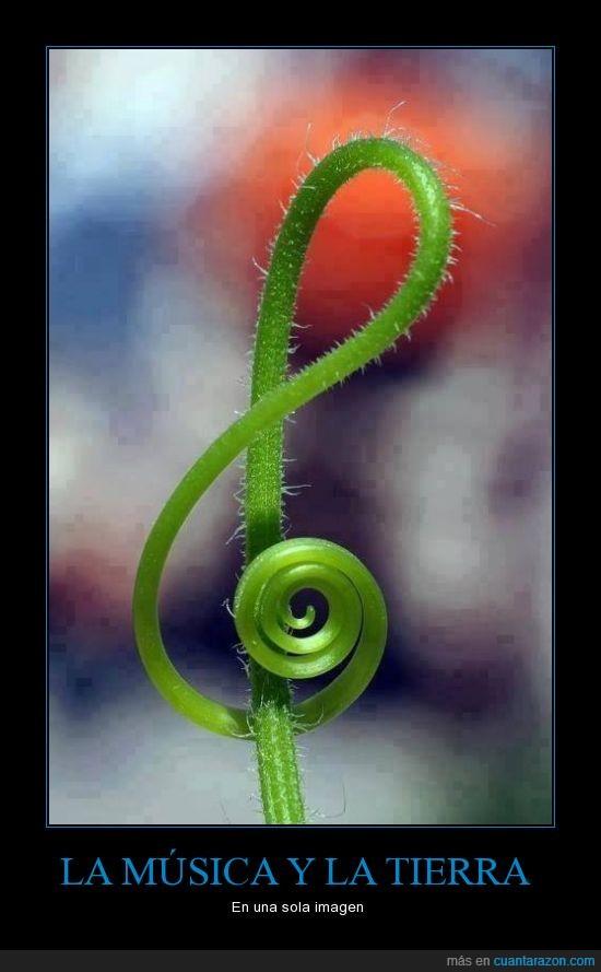 clave de sol,llave de sol,música,nota,planta,Sol,tierra