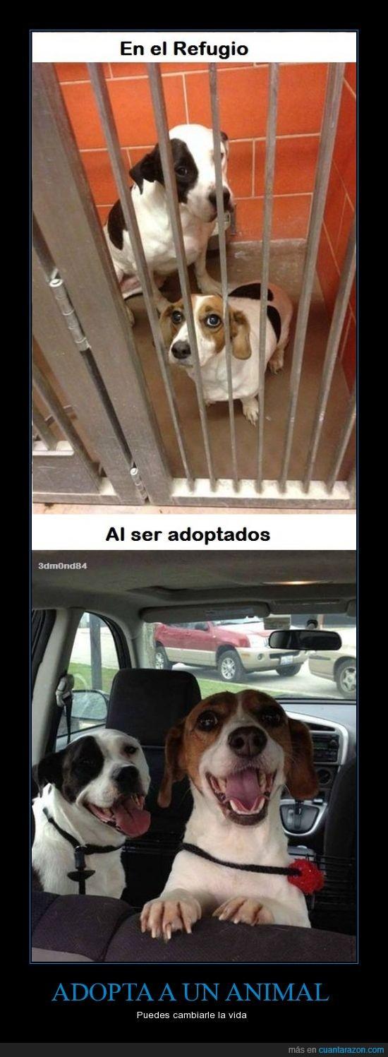 adopta,contento,feliz,mascotas,perrera,perro,Perros,refugio,triste