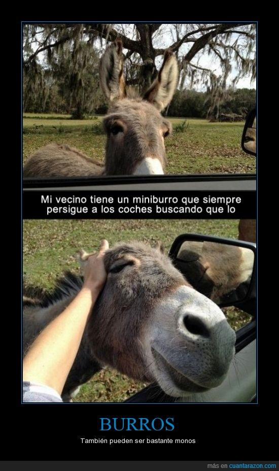 acariciar,adorable,burro,cabeza,coche,cute,mono,perseguir,tocar
