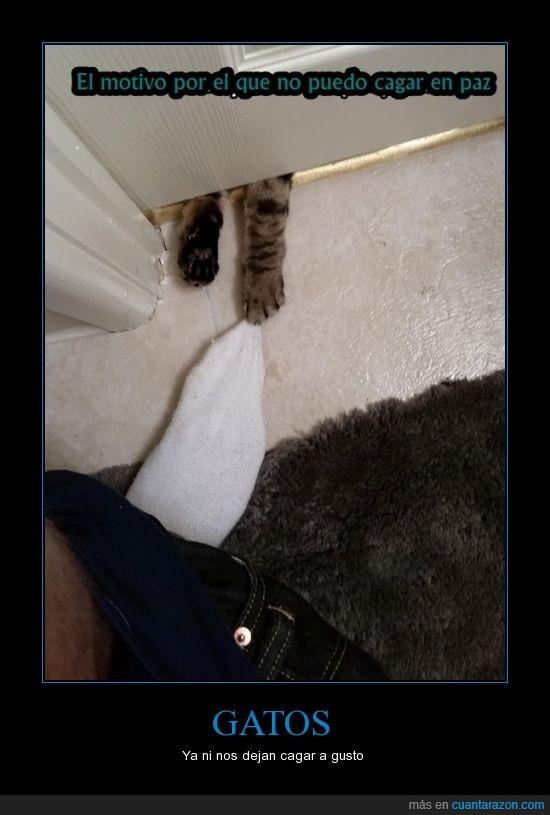arañar,caca,cagar,calcetin,debajo,gatos,paz,poo,puerta,zarpa