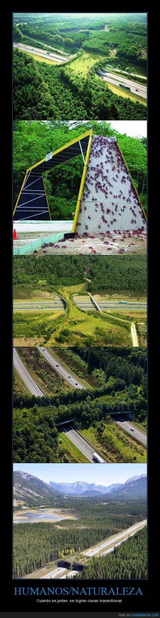 ambiente,carretera,humano,medio,naturaleza,puente