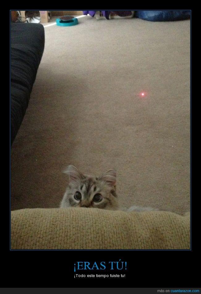 gato,jugar,láser,nos han calado
