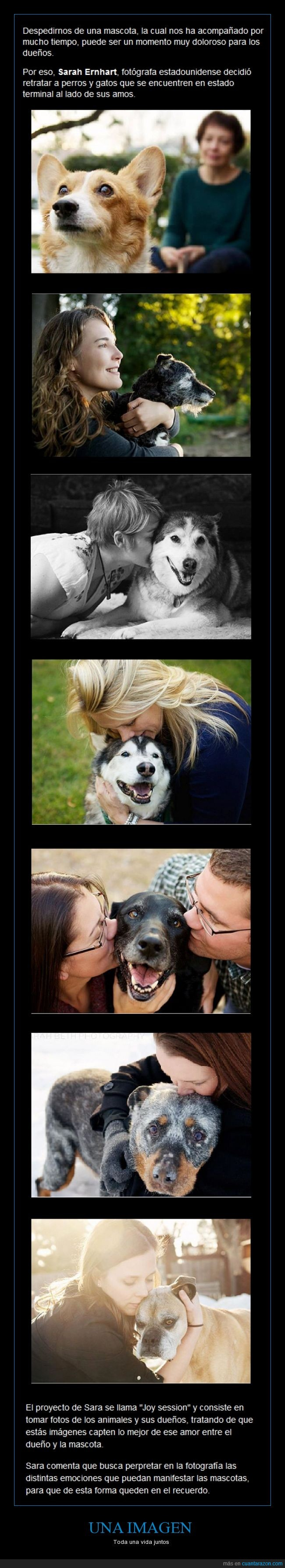 Adiós,Amigos,Amor,Emotivo,Fase terminal,Fotógrafa,No encontré ninguna foto de dueños y gatos,Perro,Sesión,Triste