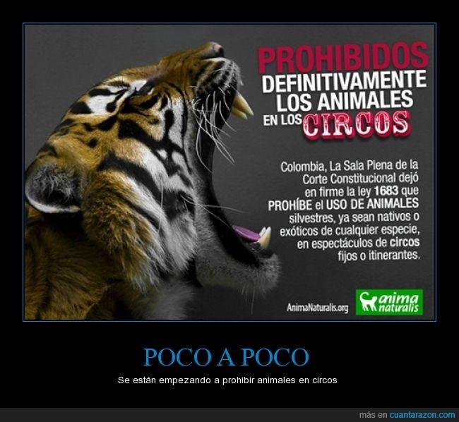 animales,circo,Colombia,Faltan los toros,fiesta,No más tortura,Por fin,uso
