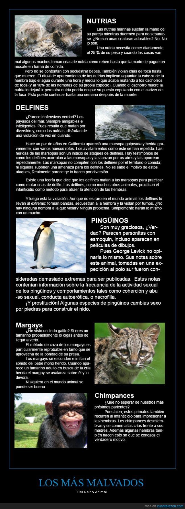 animales,chimpances,los humanos somos peores,los Simpson tenían razón otra vez,pingüinos