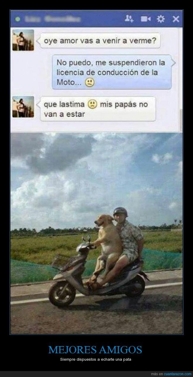 amigo,hombre,llevar,mejor,moto,motocicleta,perro