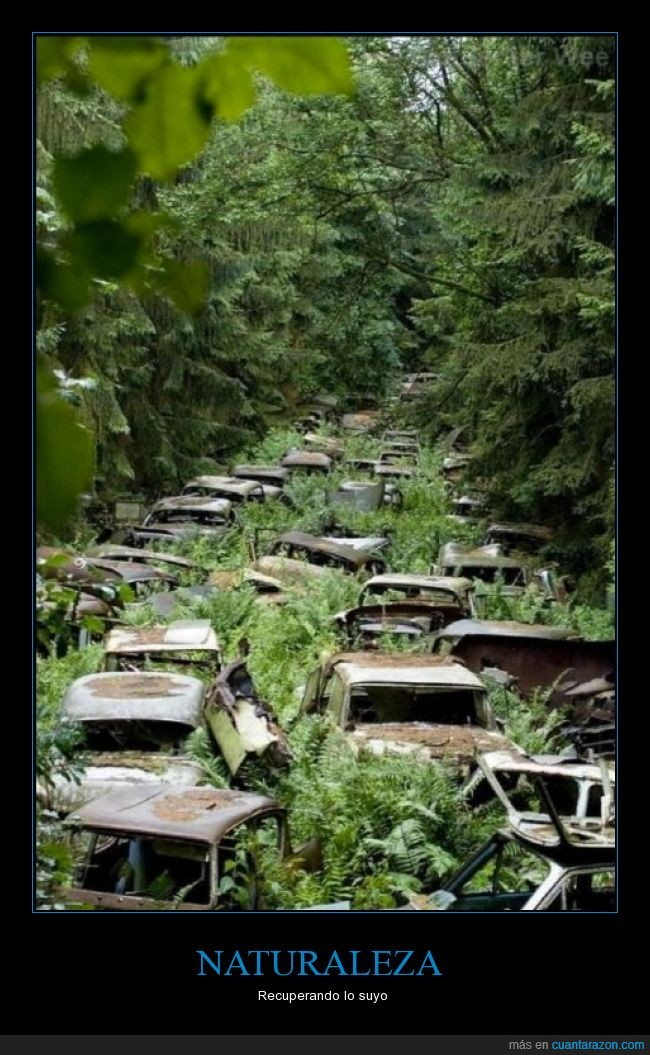 abandonado,árboles,coches,crecer,naturaleza,planta