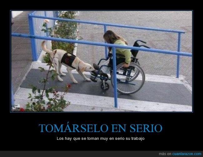 amigos,arrastrar,ayudar,niña,perros,rampa,silla de ruedas,subir