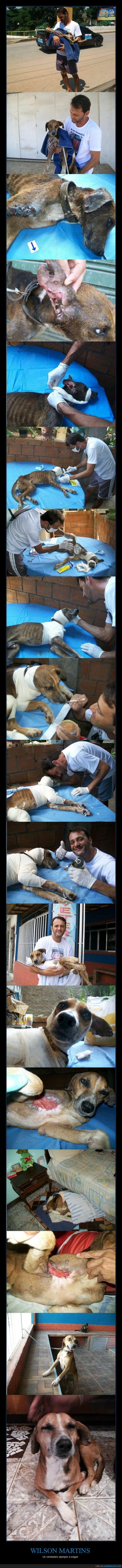 ayudar,brasileño,de animales,enfermedades,perrito,protector,se merece un premio nobel,sin intereses,veterinario,voluntario