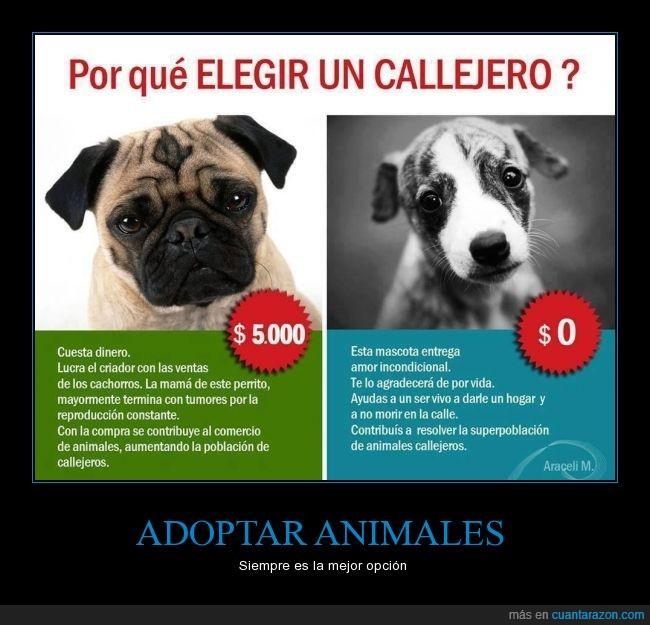 adoptar,animal,callejero,comprar,mascota,raza,rescate
