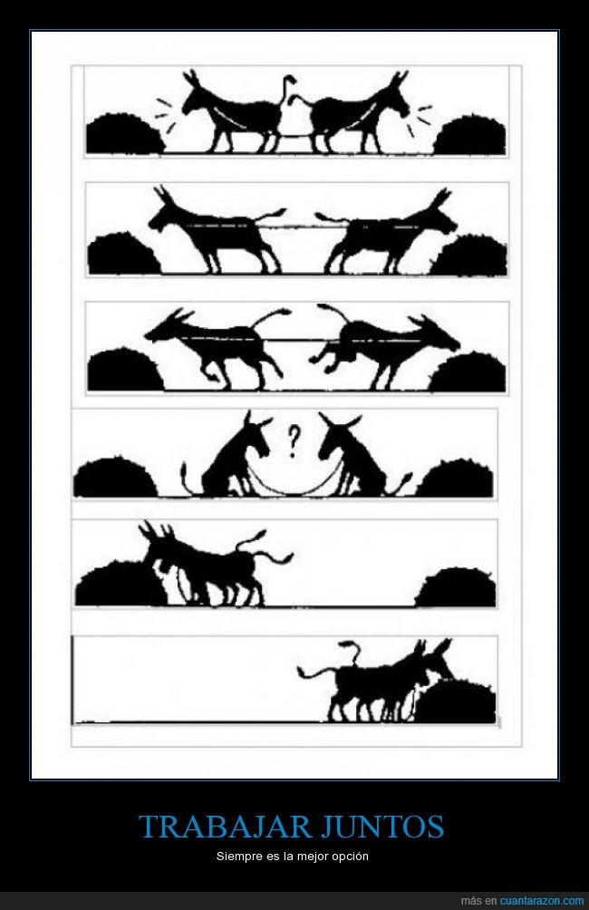 Resultado de imagen de burros trabajo en grupo