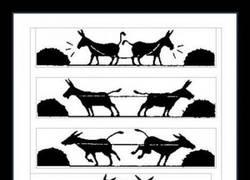 Enlace a Porque son burros, pero no tontos