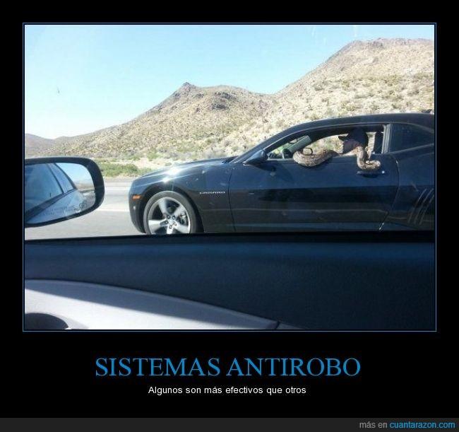 coche,culebra,mascota,pitón,seguridad,serpiente,ventana,ventanilla,víbora