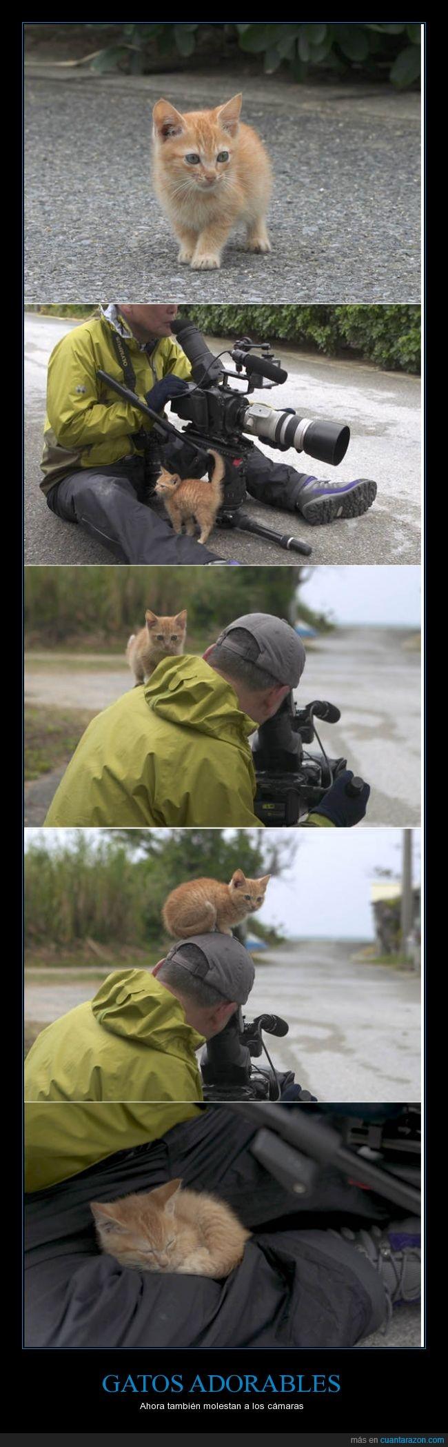 adorable,camara,camarografo,cute,gato,lindo,molesto