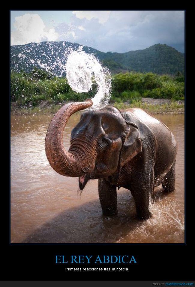 abdicación,elefante,feliz,juan carlos,rey