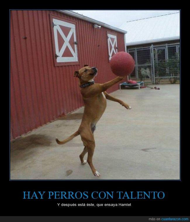 actuar,balón,ensayar,hamlet,perro,ser o no ser