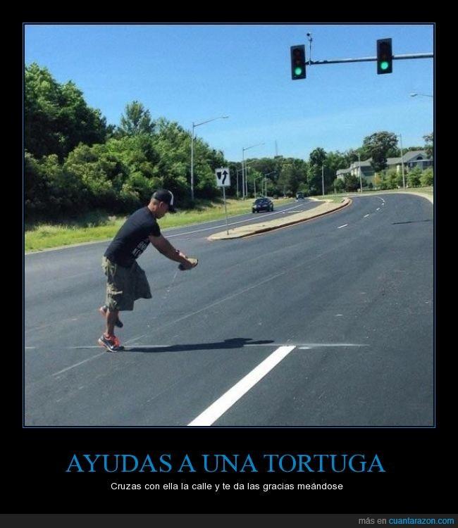 ayudar,calle,cruzar,meando,mear,pis,tortuga