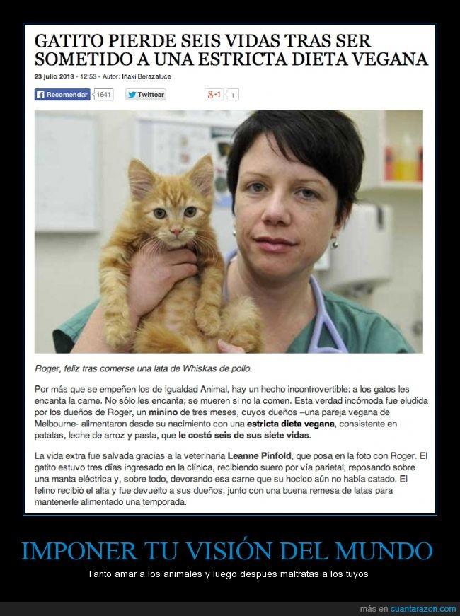 gatito,gato,humanizar sin sentido,ignorantes,maltrato animal,vegano