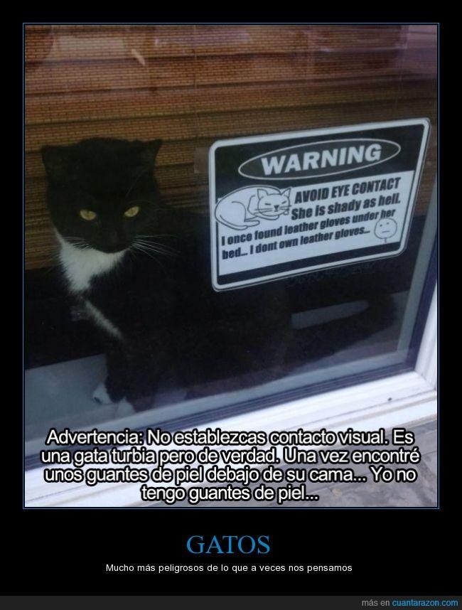 cama,debajo,esconder,felino,felinos,gata,gatos,guante,ladrona,peligro,piel,ventana